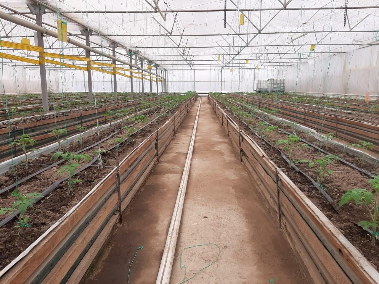 Биогумус – гарантия экологически чистых продуктов